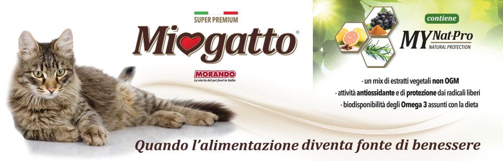 Miogatto_1.jpg