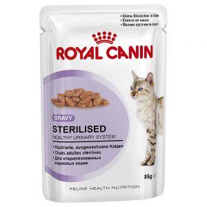 umido royal canin per gatti