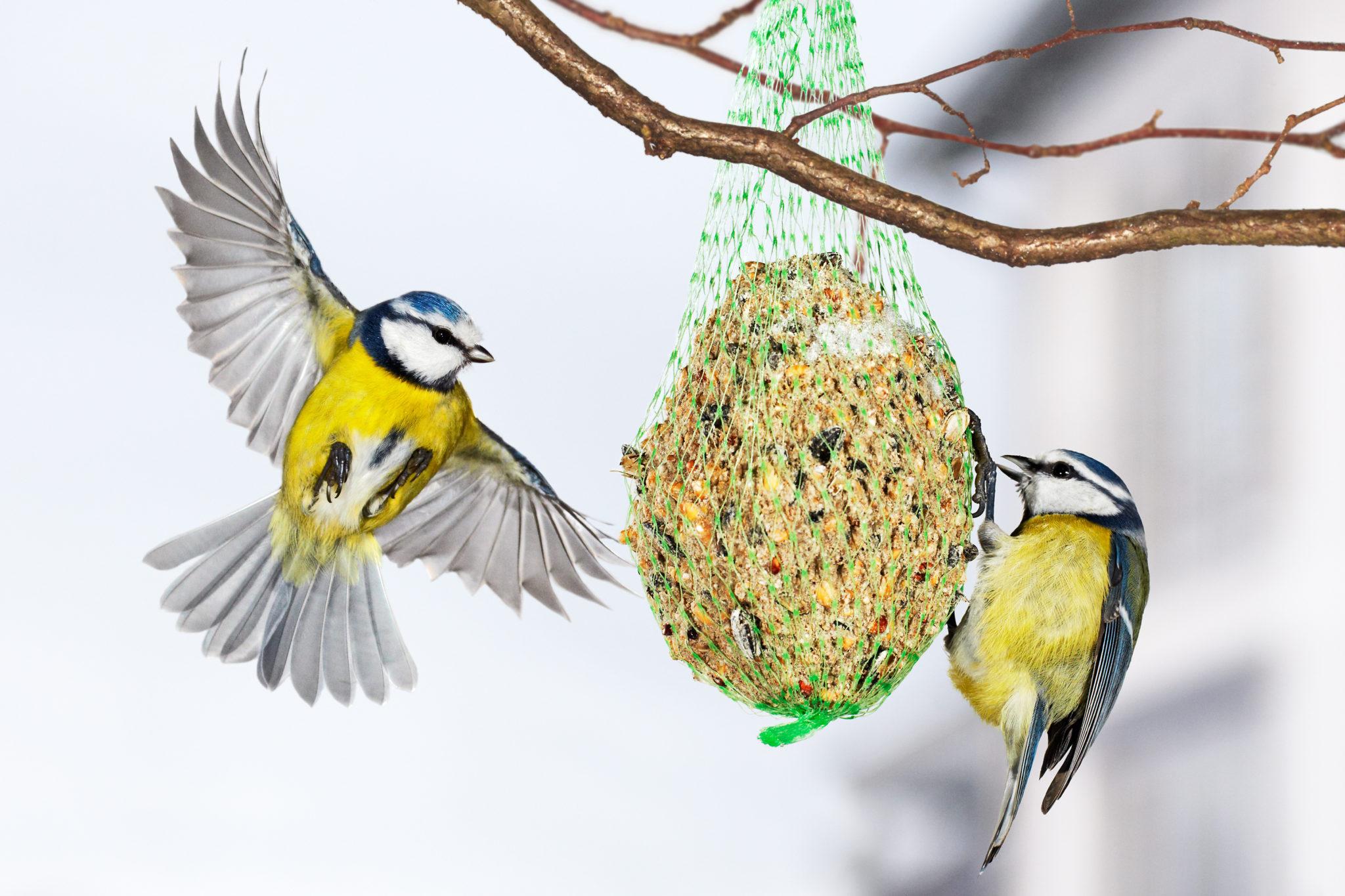 Cibo e casette per uccelli selvatici