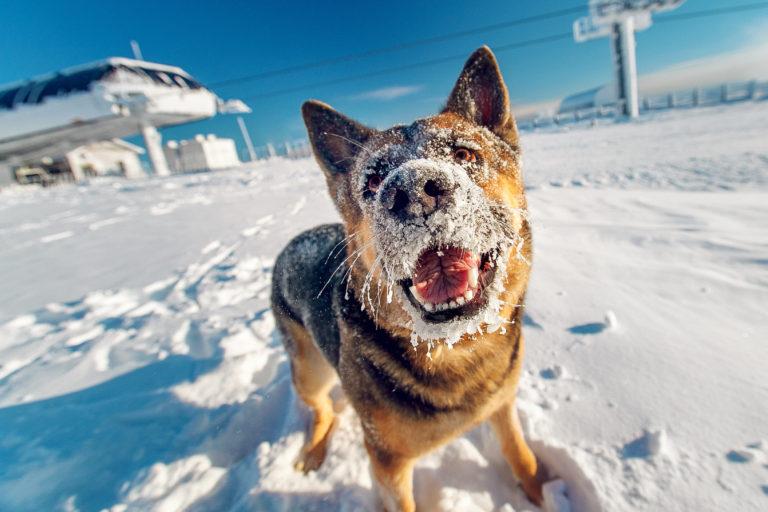 I cani e l'inverno