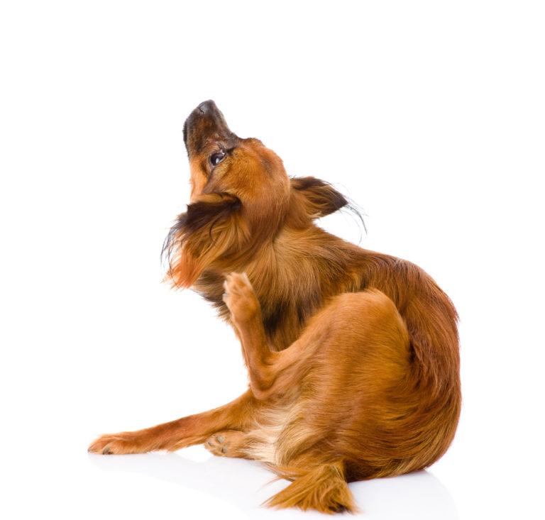 Cura del pelo per cani
