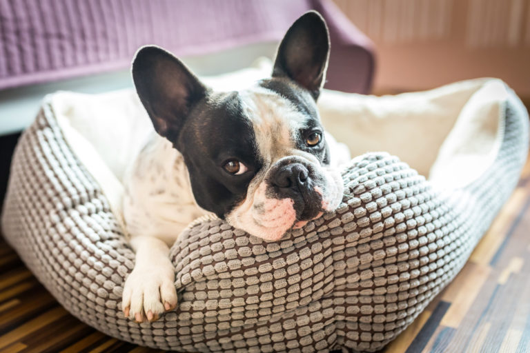 das richtige hundebett