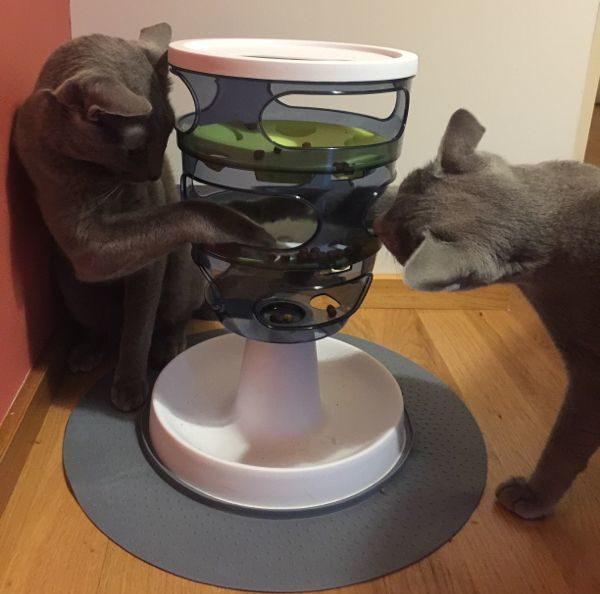 juguetes interactivos y juegos de inteligencia para gatos