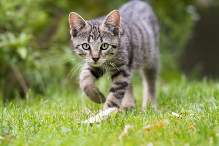 giovane gatto all'aperto