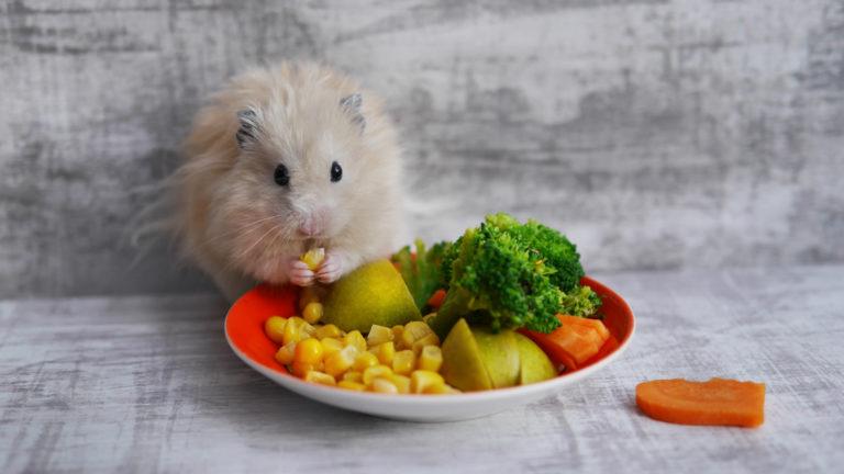criceto che mangia delle verdure