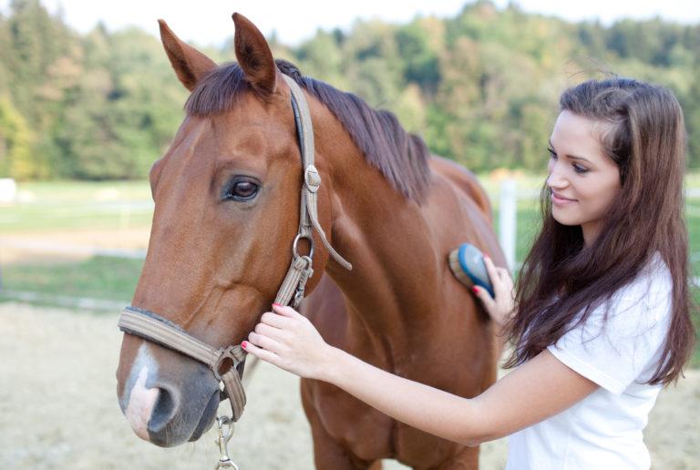 donna che spazzola il cavallo