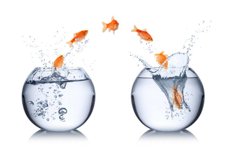 cambiare acquario