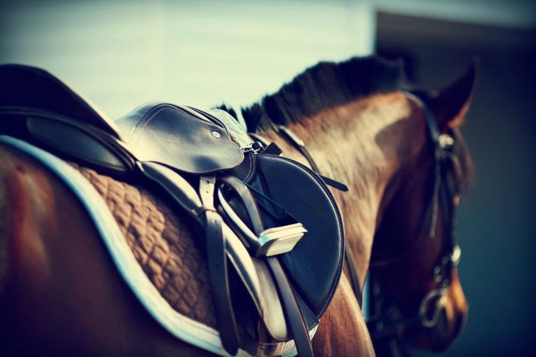 sella per cavallo