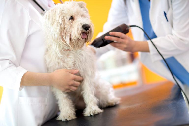 veterinario che tosa il cane