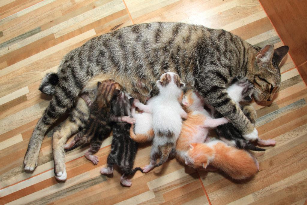 dopo la nascita dei gattini