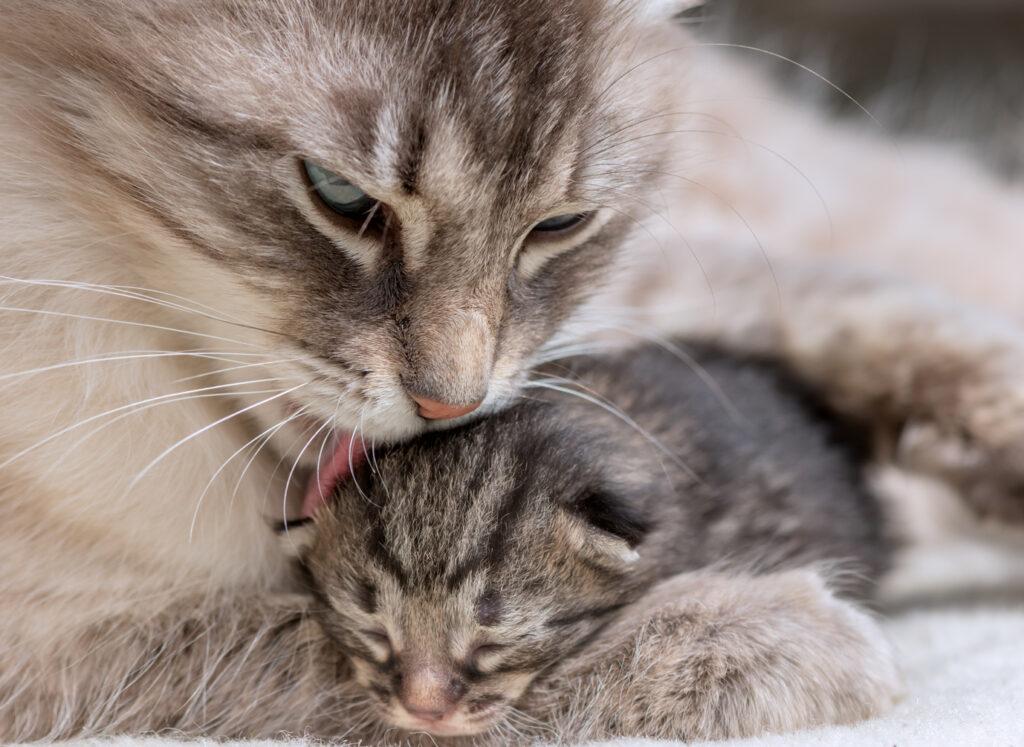 attenzioni dopo la nascita dei gattini