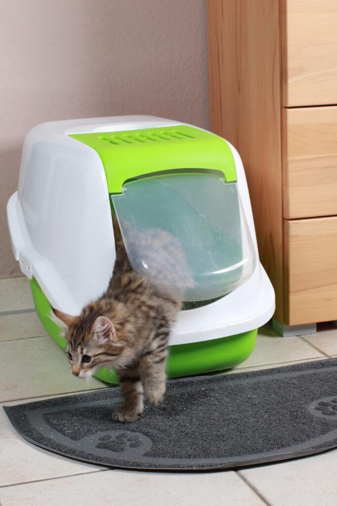 toilette gatto