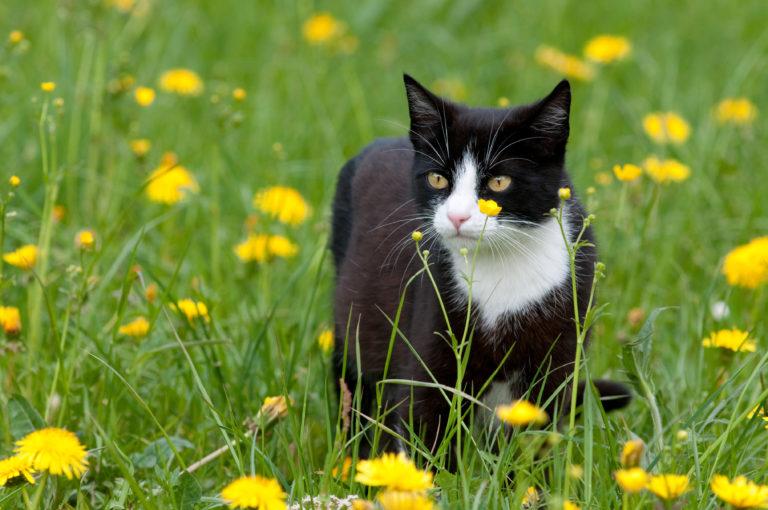gatto in mezzo ai fiori
