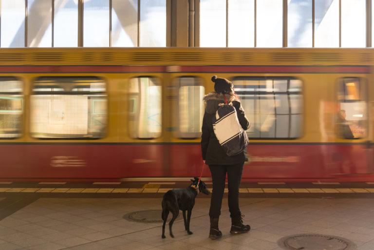 un cane e il suo proprietario aspettano il treno