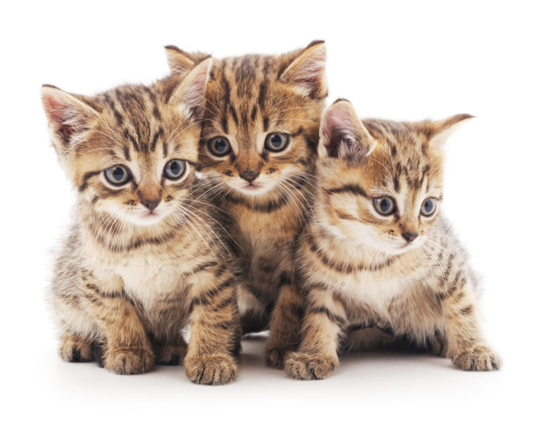 3 cuccioli di gatto