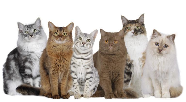 Racespecifikt kattefoder