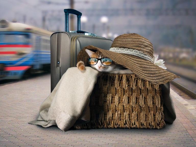 gatto in una borsa