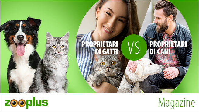 Proprietari di cani vs Proprietari di gatti