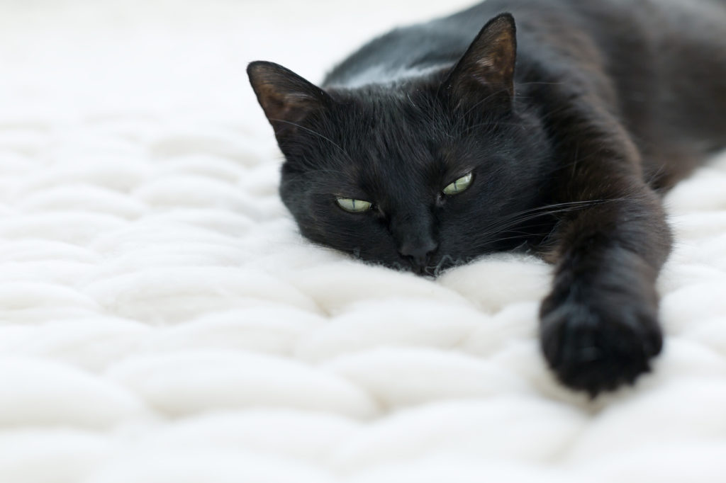 I problemi dell'apparato respiratorio nei gatti
