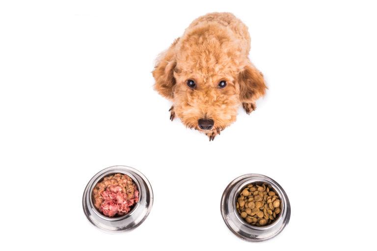 Barf oder Trockenfutter für Hunde