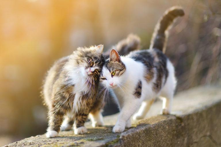 la convivenza tra gatti