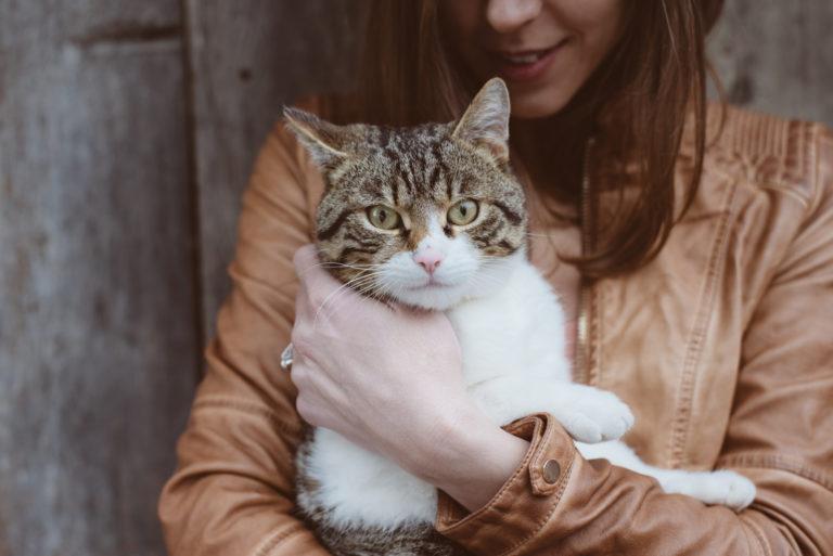 Differenze tra proprietari di cani e proprietari di gatti