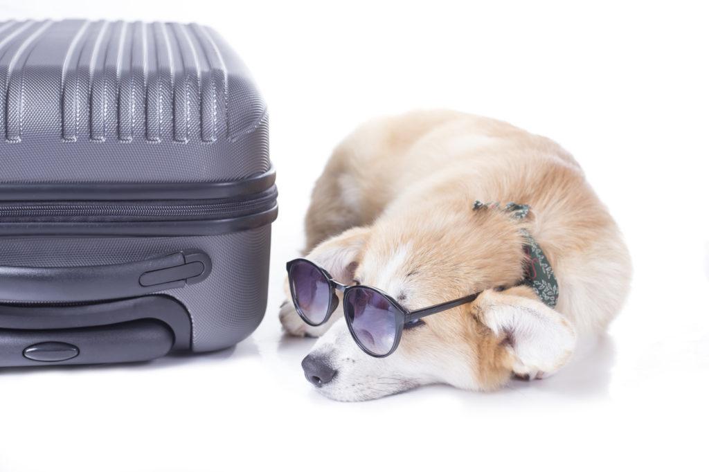 viaggiare con il cane in auto o in aereo