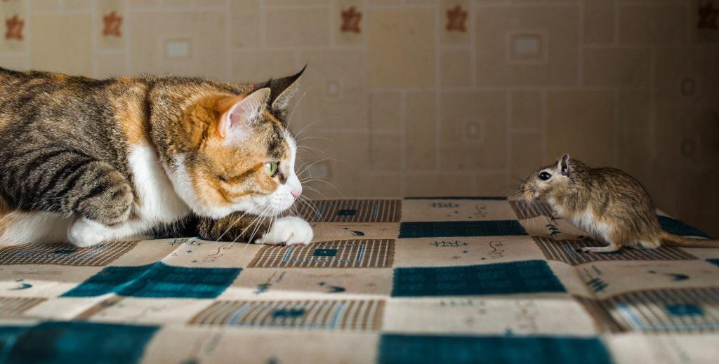 gatto e gerbillo