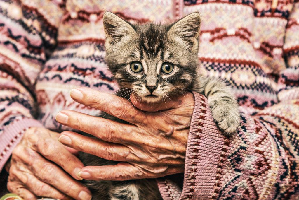 I gatti sono attenti al nostro benessere