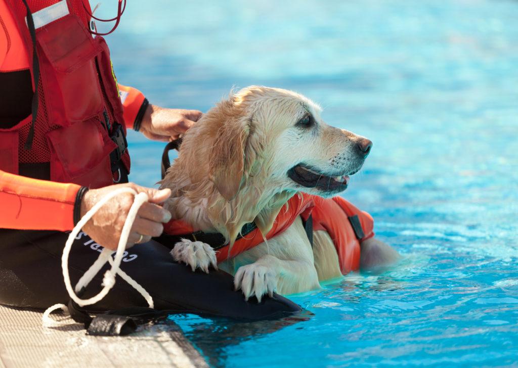 I cani ci salvano la vita