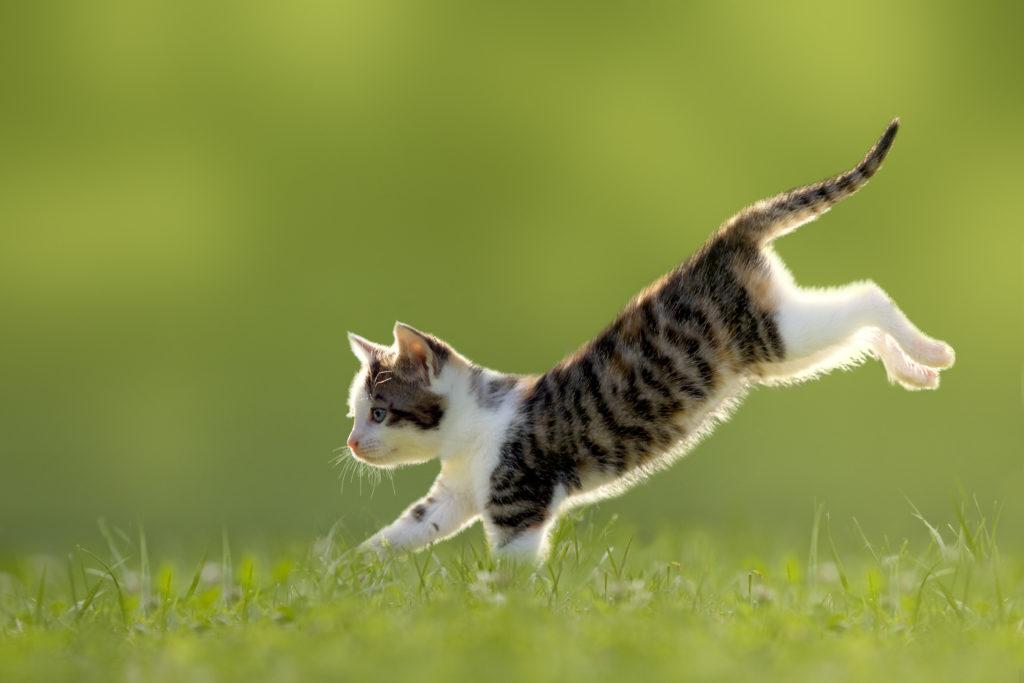 Come abituare il gatto ad uscire all'esterno