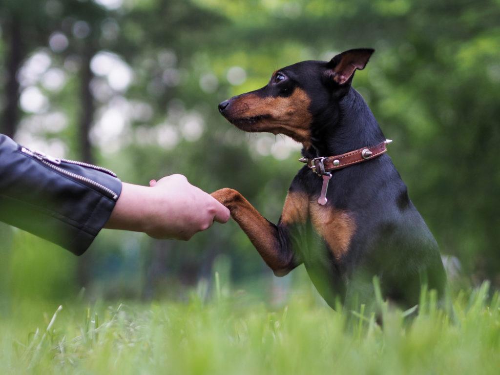 cane che porge la zampa