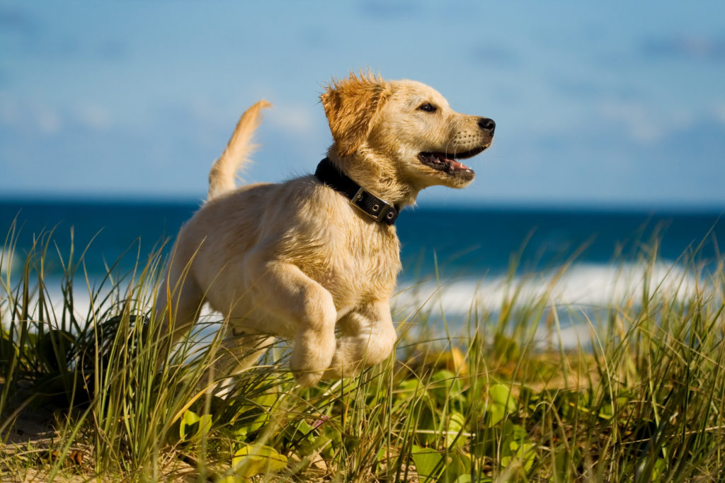 I segnali che dimostrano che il cane è felice