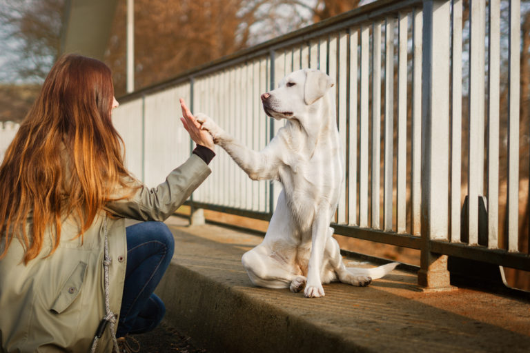 Educare il cane a camminare senza guinzaglio