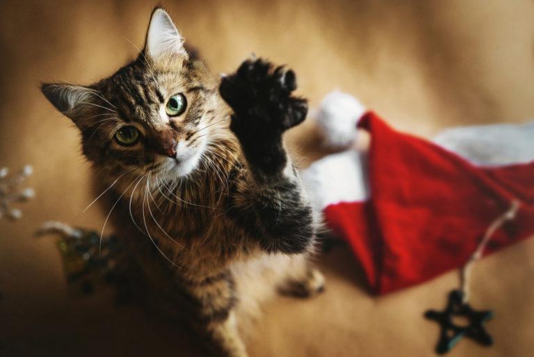 Immagini Natale Con Gatti.Natale Al Sicuro Con Il Gatto 5 Consigli Utili Zooplus