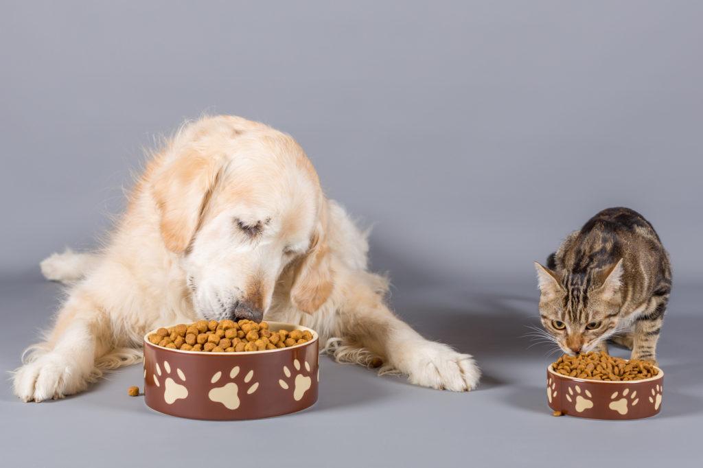 Il gatto può mangiare il cibo per cani?