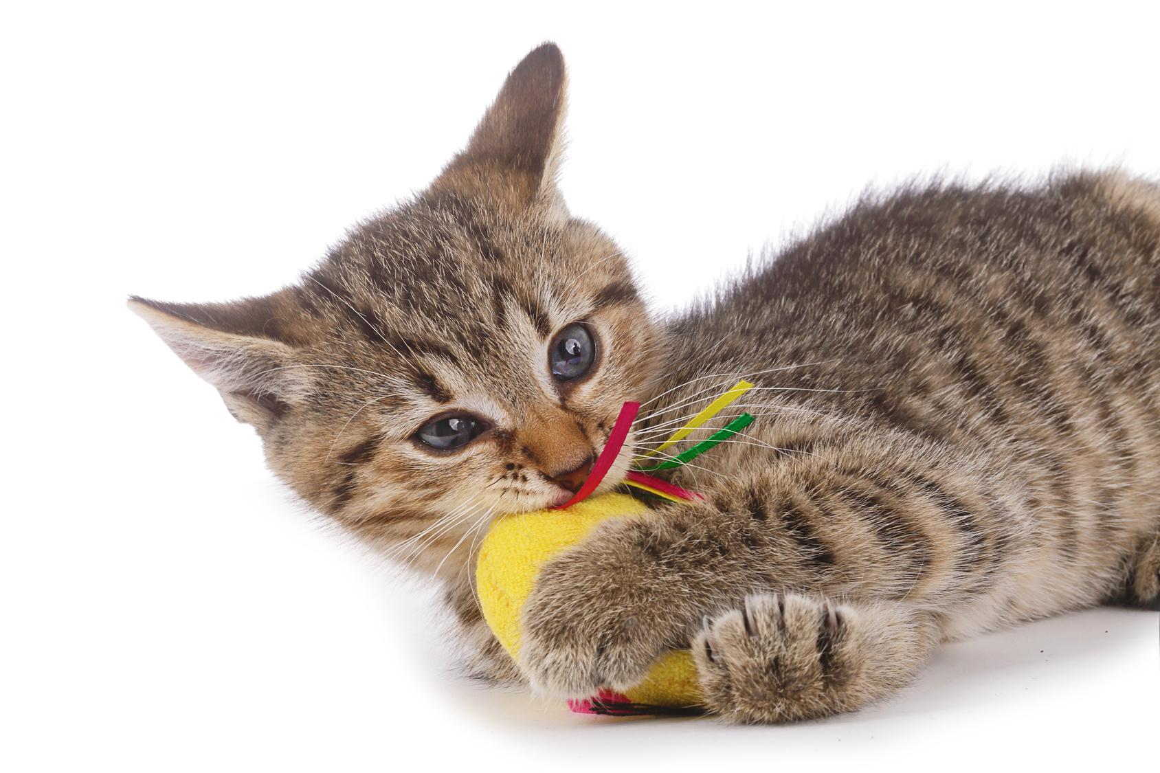 Segnali che dimostrano che il gatto è felice