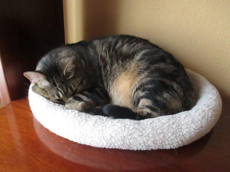 Far dormire il gatto nel letto