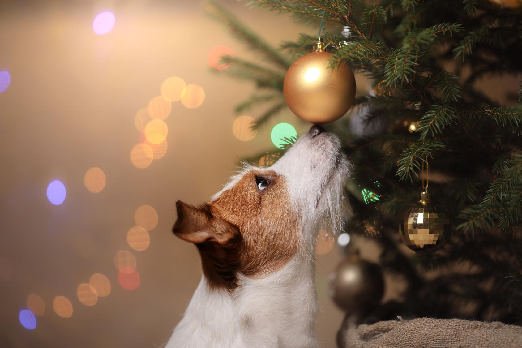 Natale al sicuro con il cane