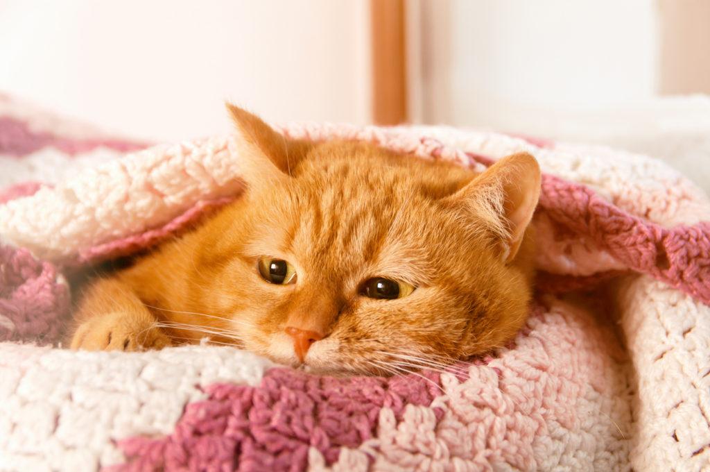 Infezioni alle vie urinarie nel gatto