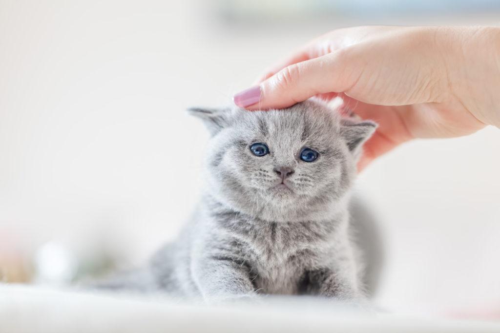 Sverminare il gatto