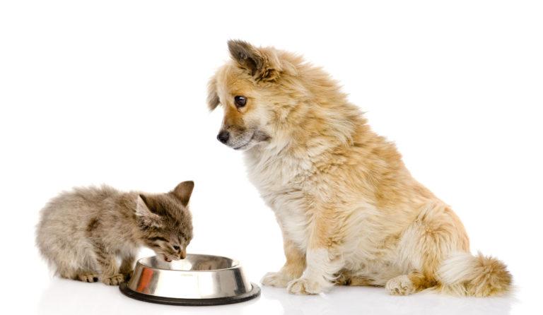 Il cane può mangiare il cibo per gatti
