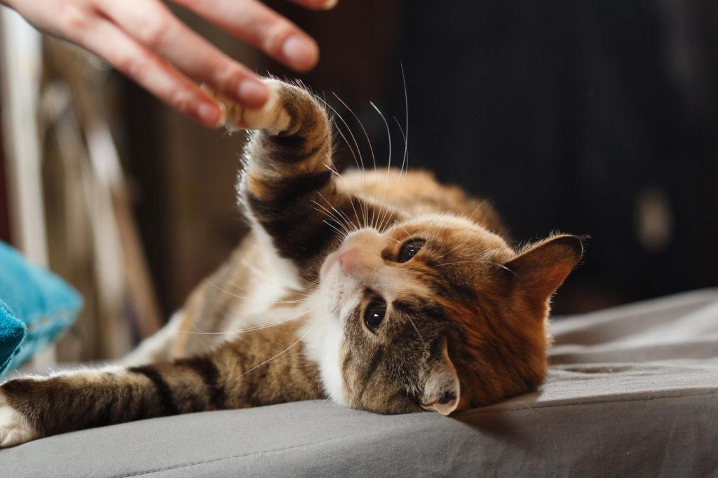 Insegnare dei comandi al gatto