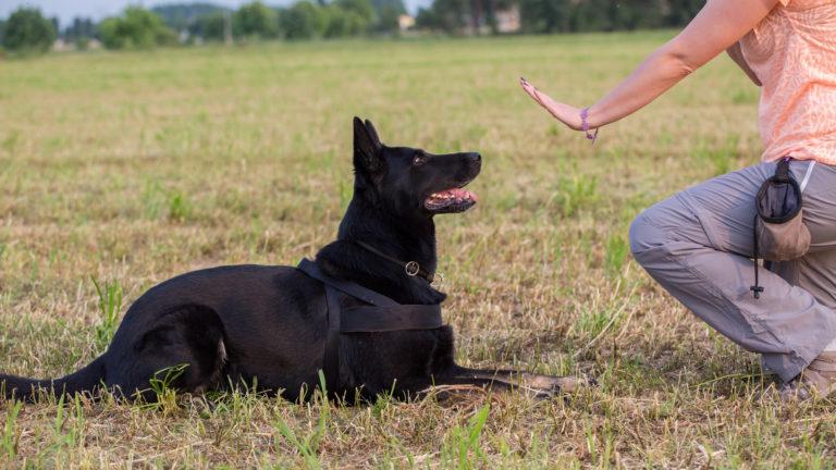 Obedience per cani