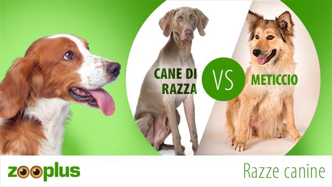 Cane di razza o meticcio?