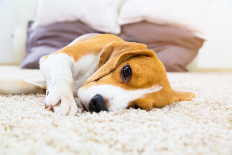 La stitichezza del cane