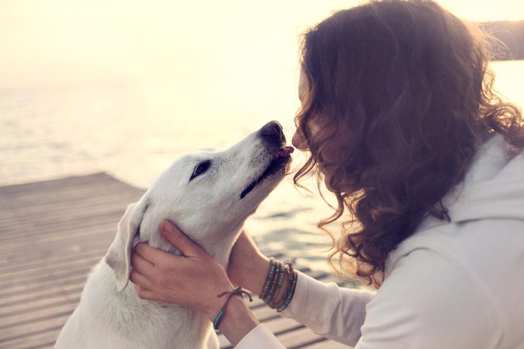 Si possono baciare i cani?