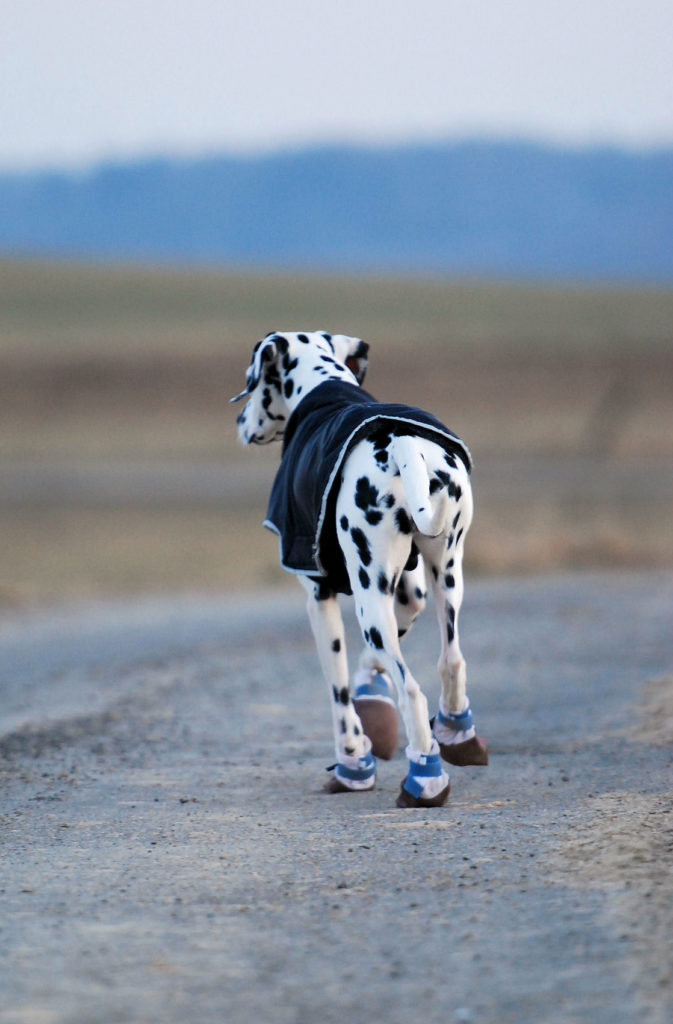 Scegliere le scarpe per cani