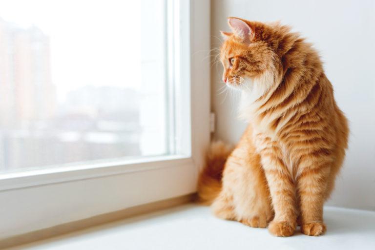 Il gatto marca il territorio