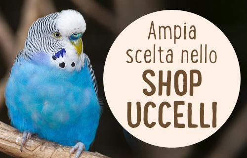 uccelli shop